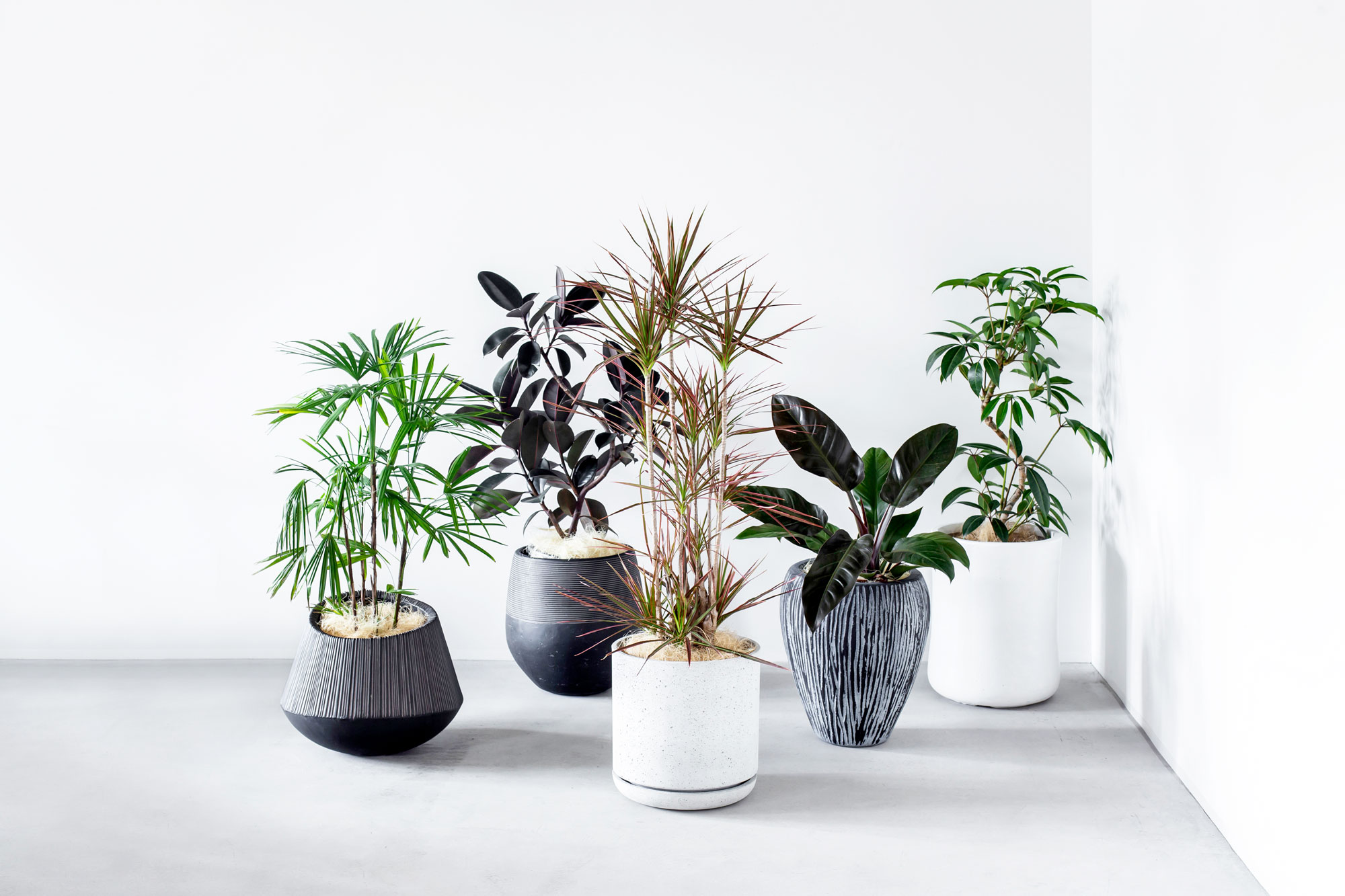 Botanism - 法人さま向けの新しいグリーンギフトサービスです。