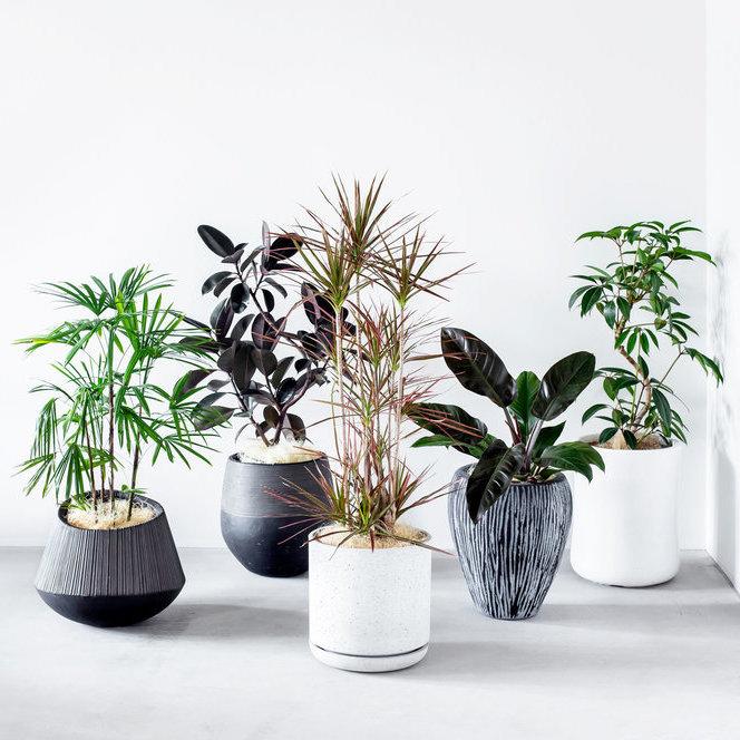 Botanism - 「Botanism(ボタニズム)」は、お祝い用の植物を、ハイセンスな観葉植物に特化した、新しいグリーンギフトのサービスです。鉢とプレートと併せてコーディネートされた本当にいいインテリアプラントを手軽に贈るサービスとして、2019年の5月にスタートしました。