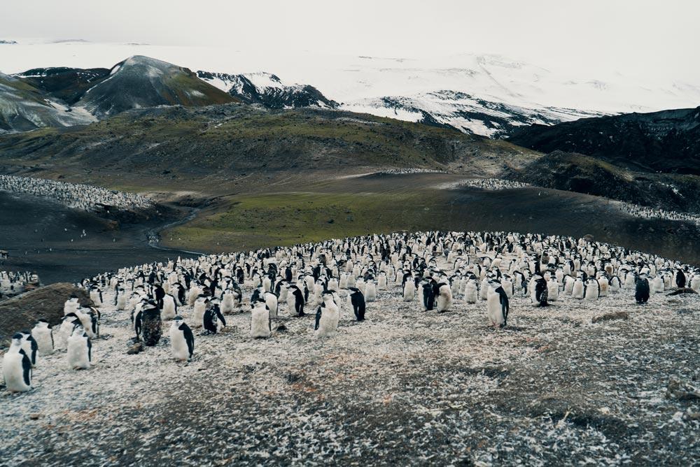 sail-to-antartica.jpg