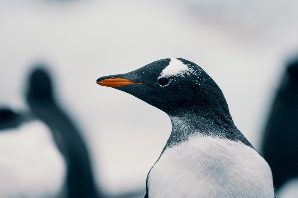 antarctica-wildlife.jpg