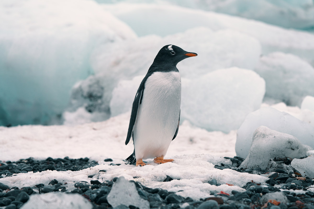 antartica-sailing-expedition.jpg