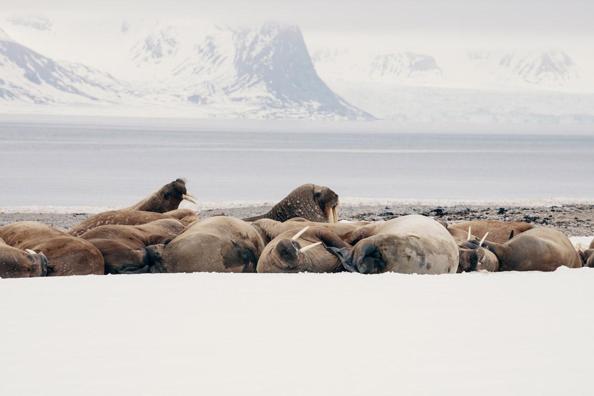 wildlife-watching-in-svalbard.jpg