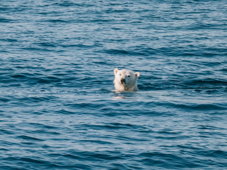 polar-bear2.jpg