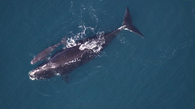 Photo credit - NOAA