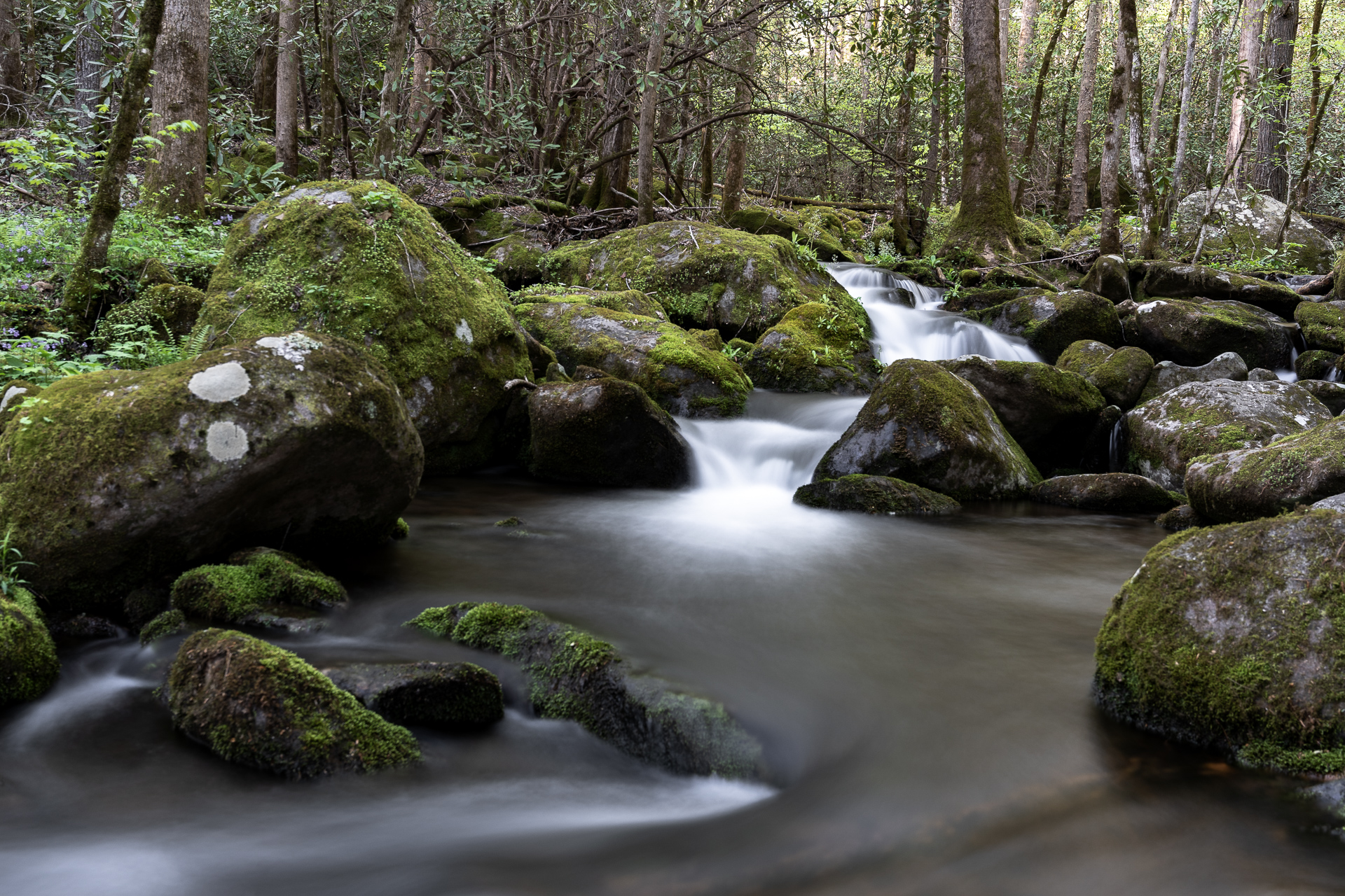 big-creek-gsmnp-great-smoky-mountains-national-park-Kathleen-Kathy-Roberts-Asheville-NC-Photographer-13.jpg