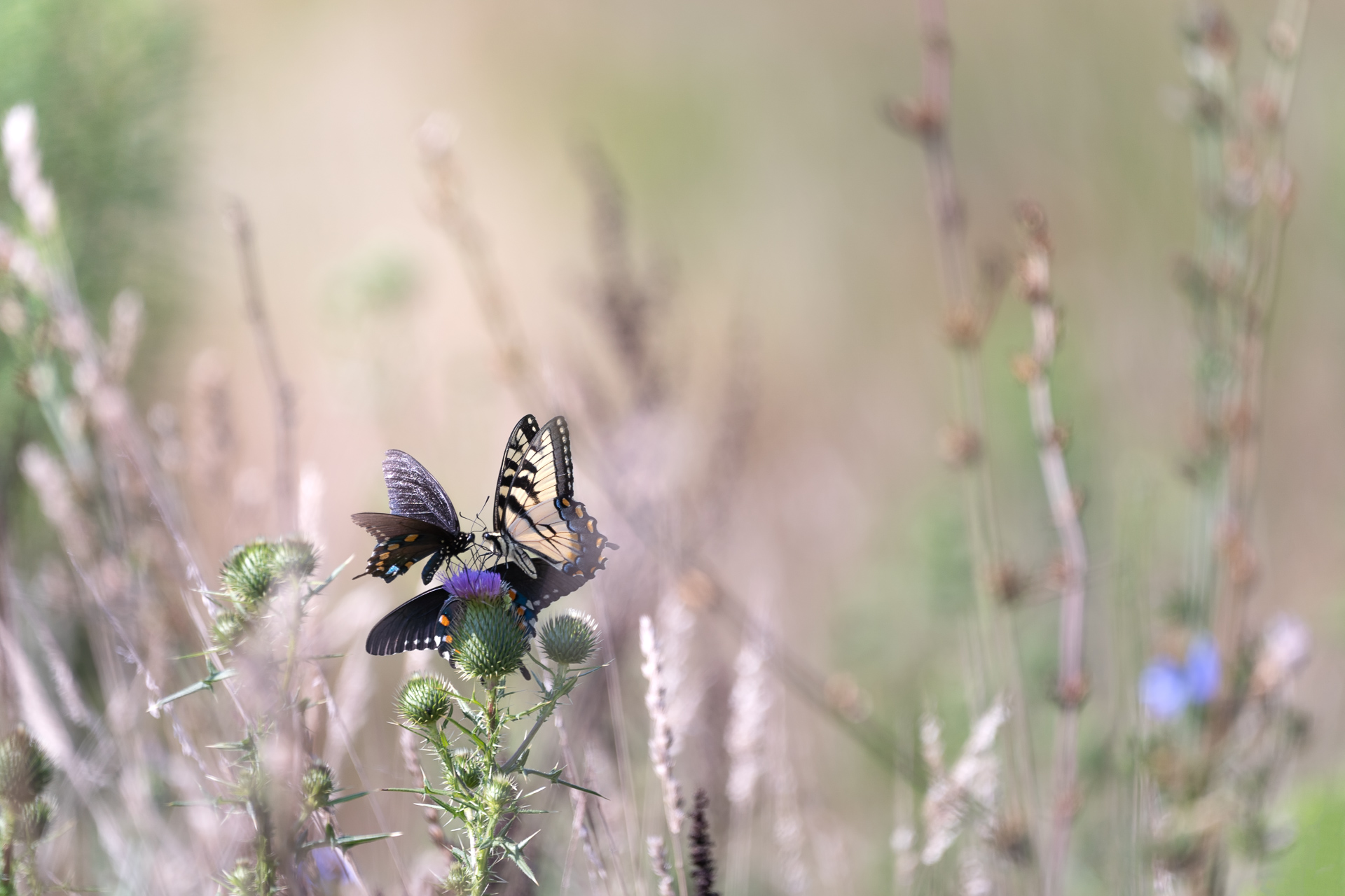 Butterflies-nature-Kathleen-Kathy-Roberts-Asheville-NC-Photographer-1.jpg