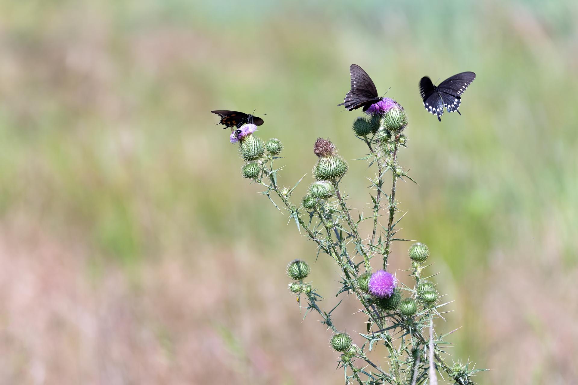 Butterflies-nature-Kathleen-Kathy-Roberts-Asheville-NC-Photographer-2.jpg