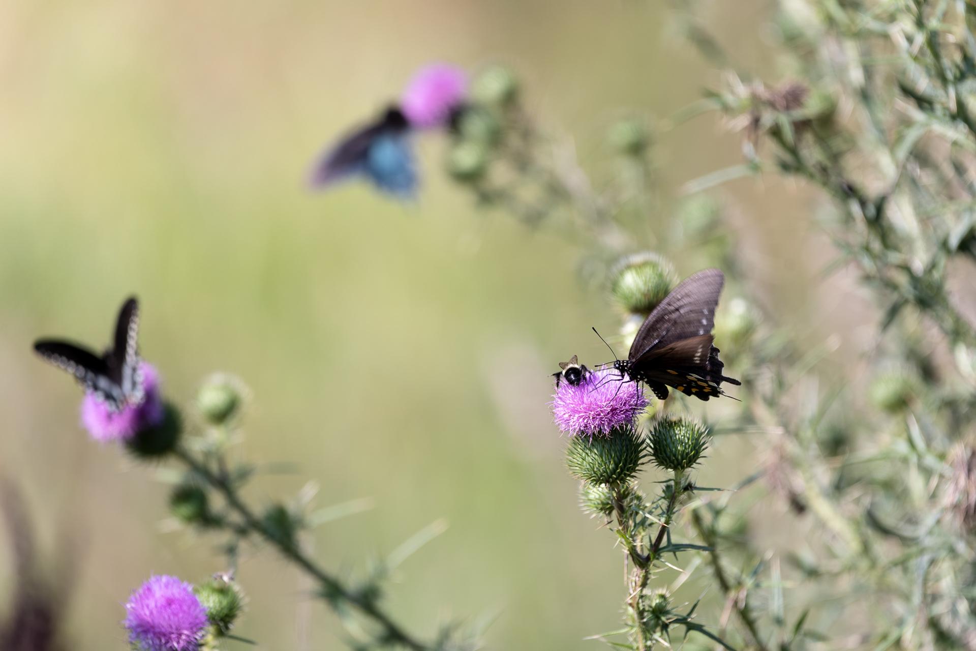 Butterflies-nature-Kathleen-Kathy-Roberts-Asheville-NC-Photographer-4.jpg