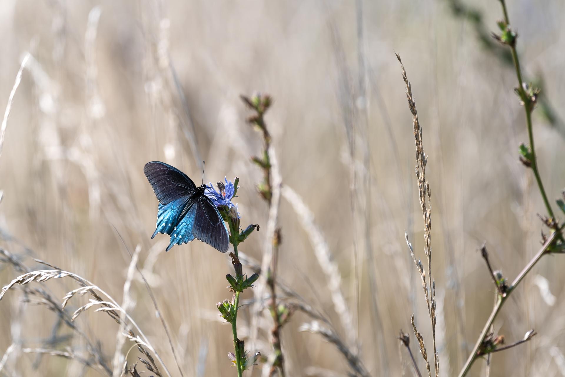 Butterflies-nature-Kathleen-Kathy-Roberts-Asheville-NC-Photographer-5.jpg