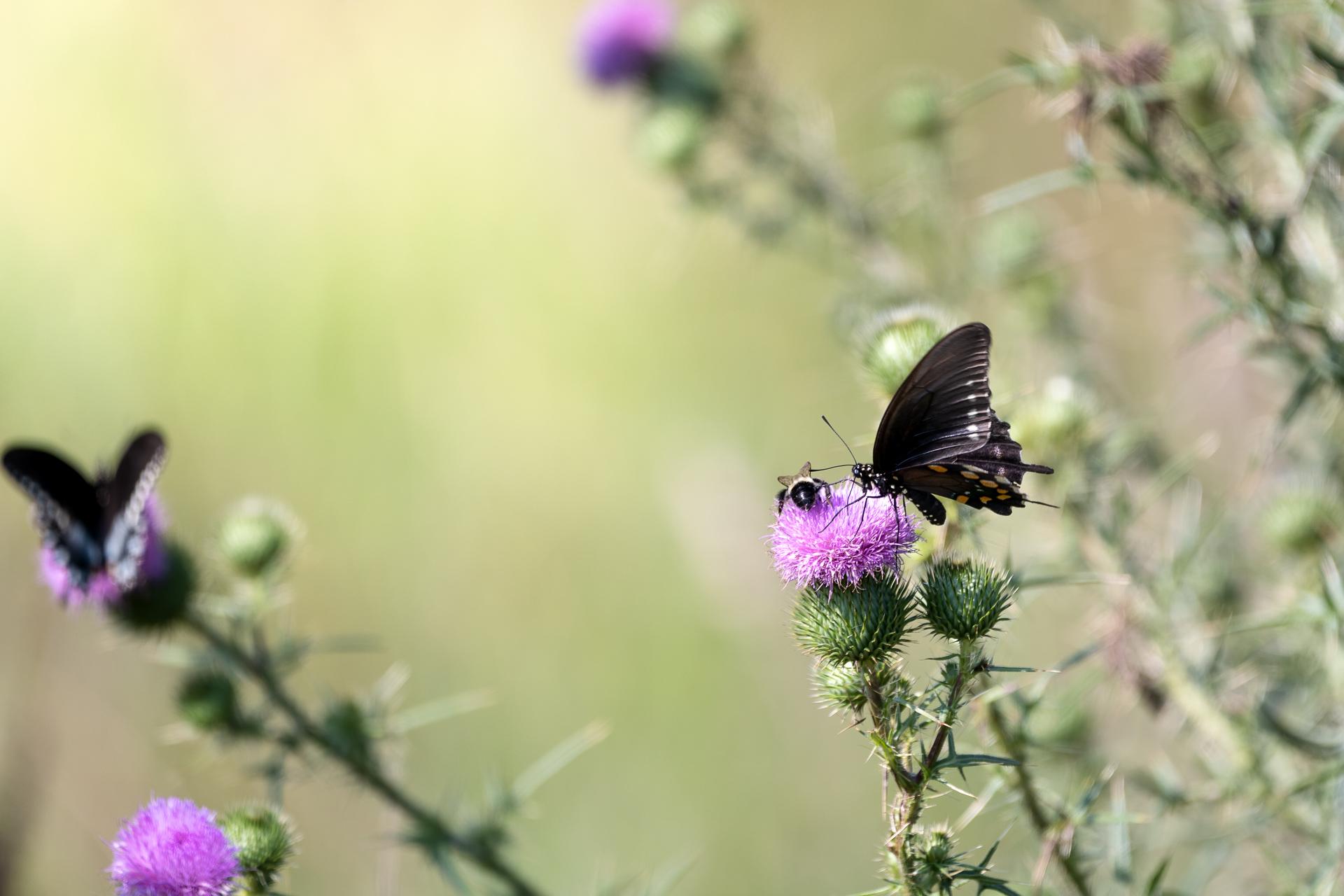 Butterflies-nature-Kathleen-Kathy-Roberts-Asheville-NC-Photographer-8.jpg