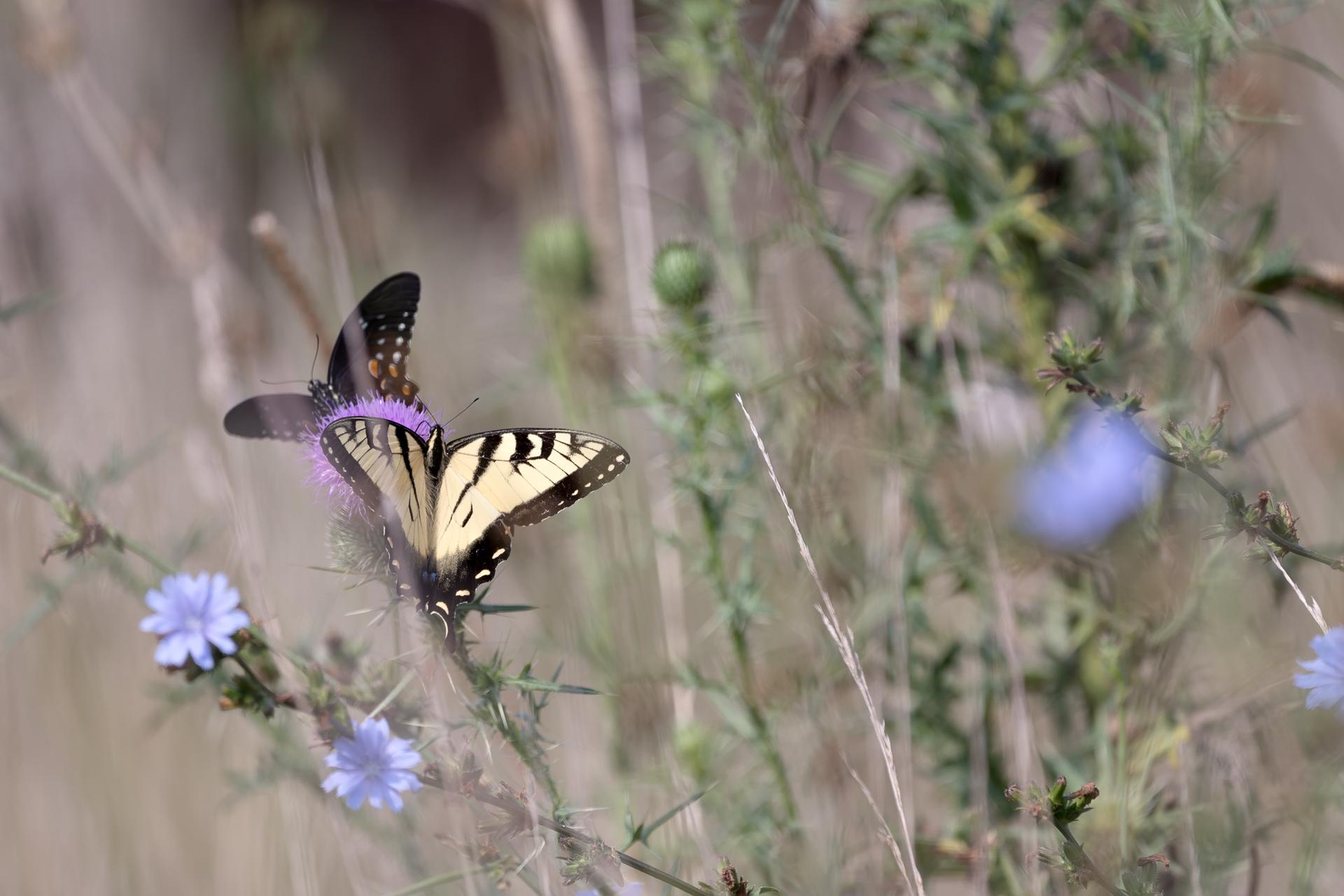 Butterflies-nature-Kathleen-Kathy-Roberts-Asheville-NC-Photographer-9.jpg