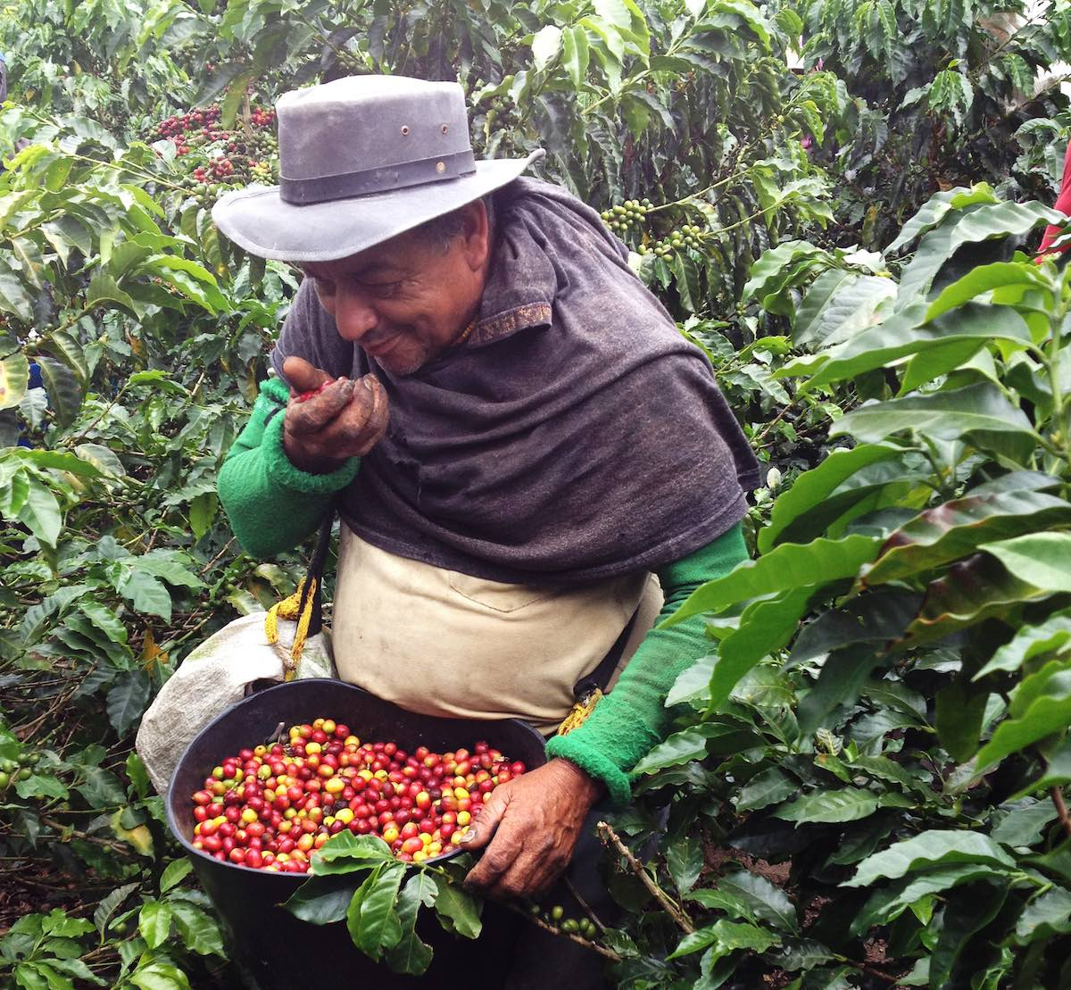 "Hammer Colombia will take place in Colombia's ""Coffee Triangle"""