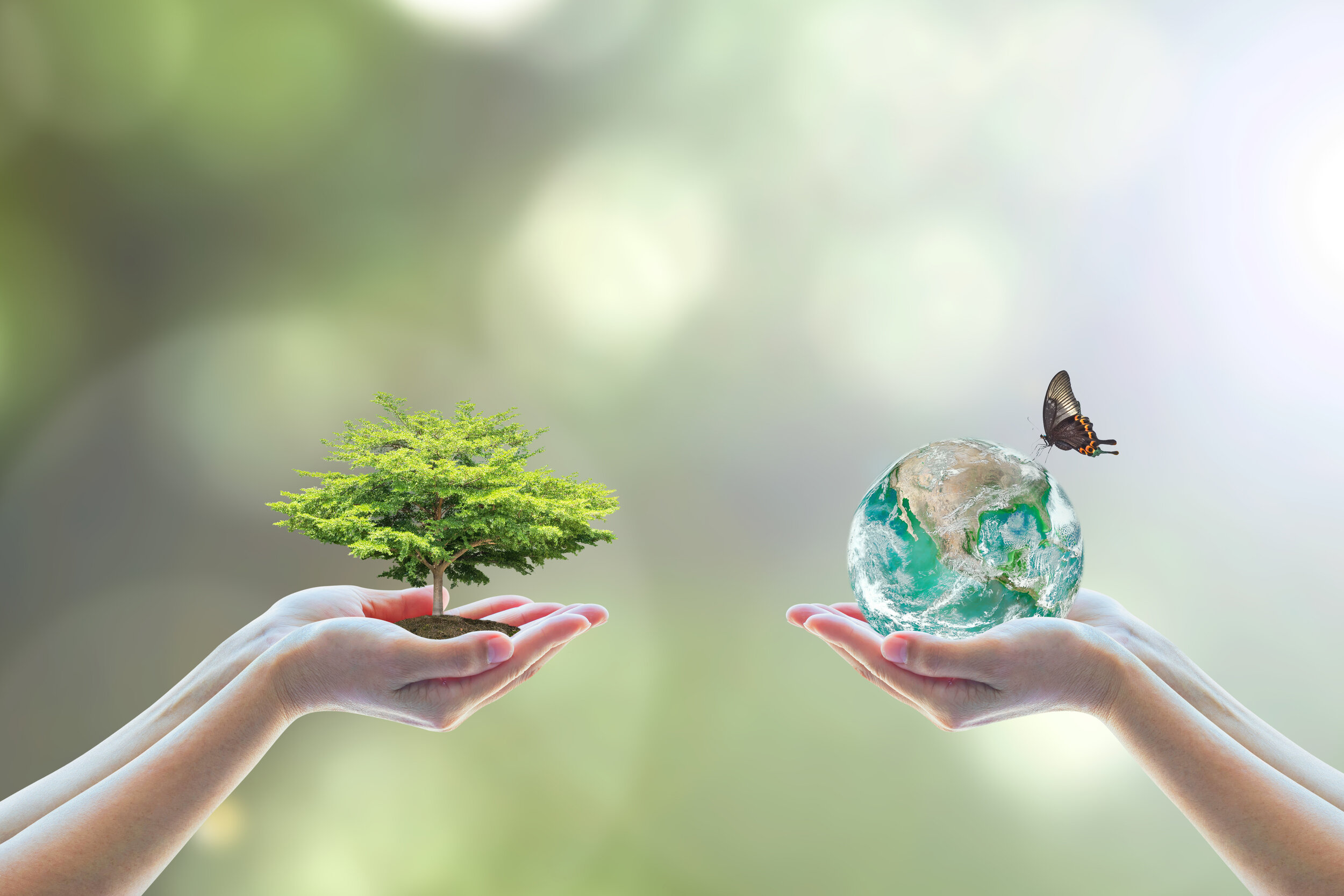 World environment day concept with tree care planting and CSR green earth on volunteer's hands for sustainable environmental development. Element of this image furnished by NASA