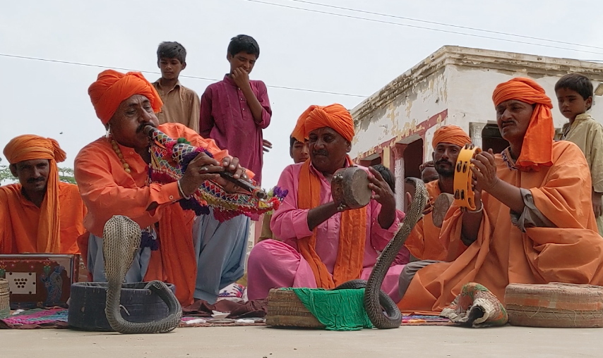 The jogis performing with the cobras they caught in Islamabad