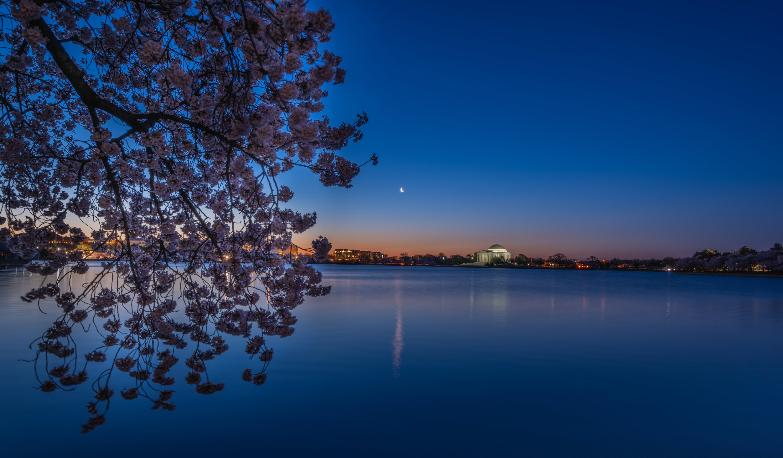 Cherry Blossom and The Blue Hour (click the image to view full size)