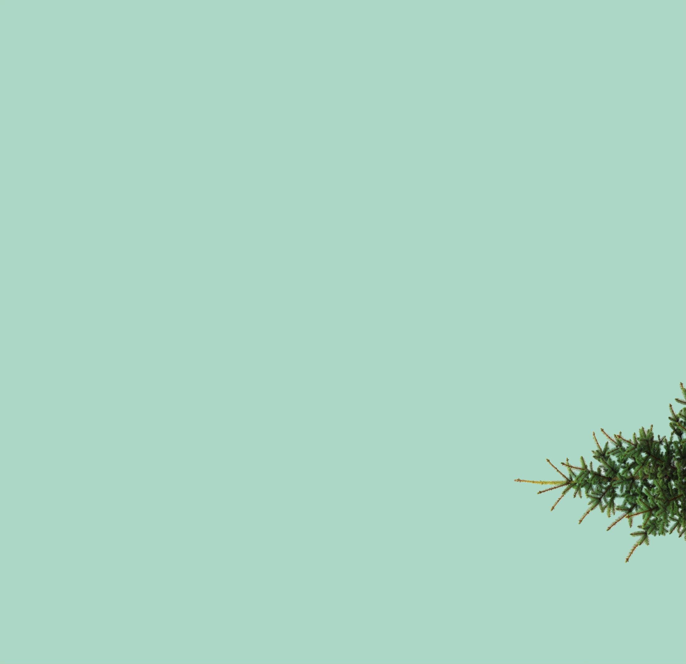 back-tree.jpg