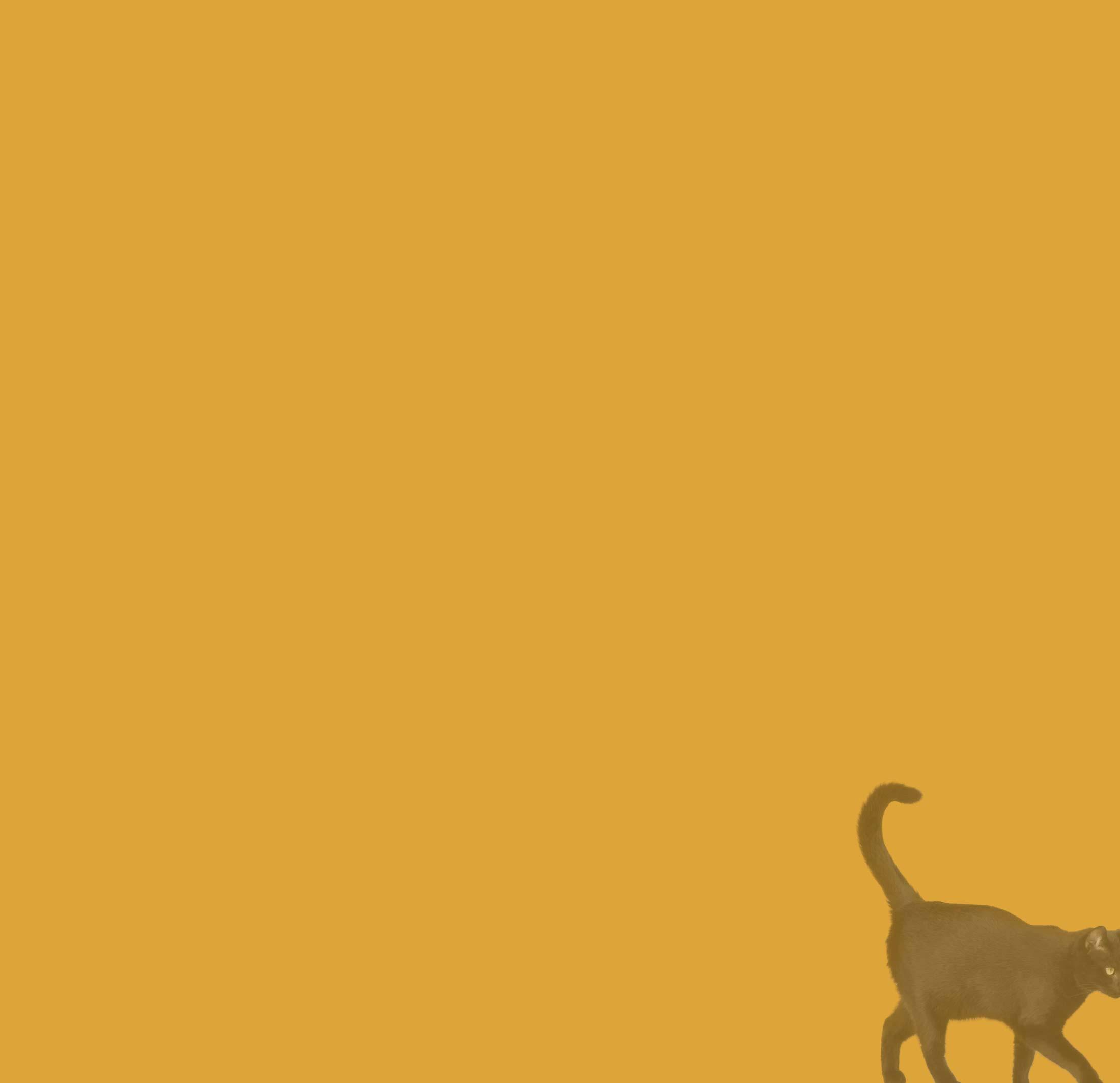 back-cat-ipad2.jpg