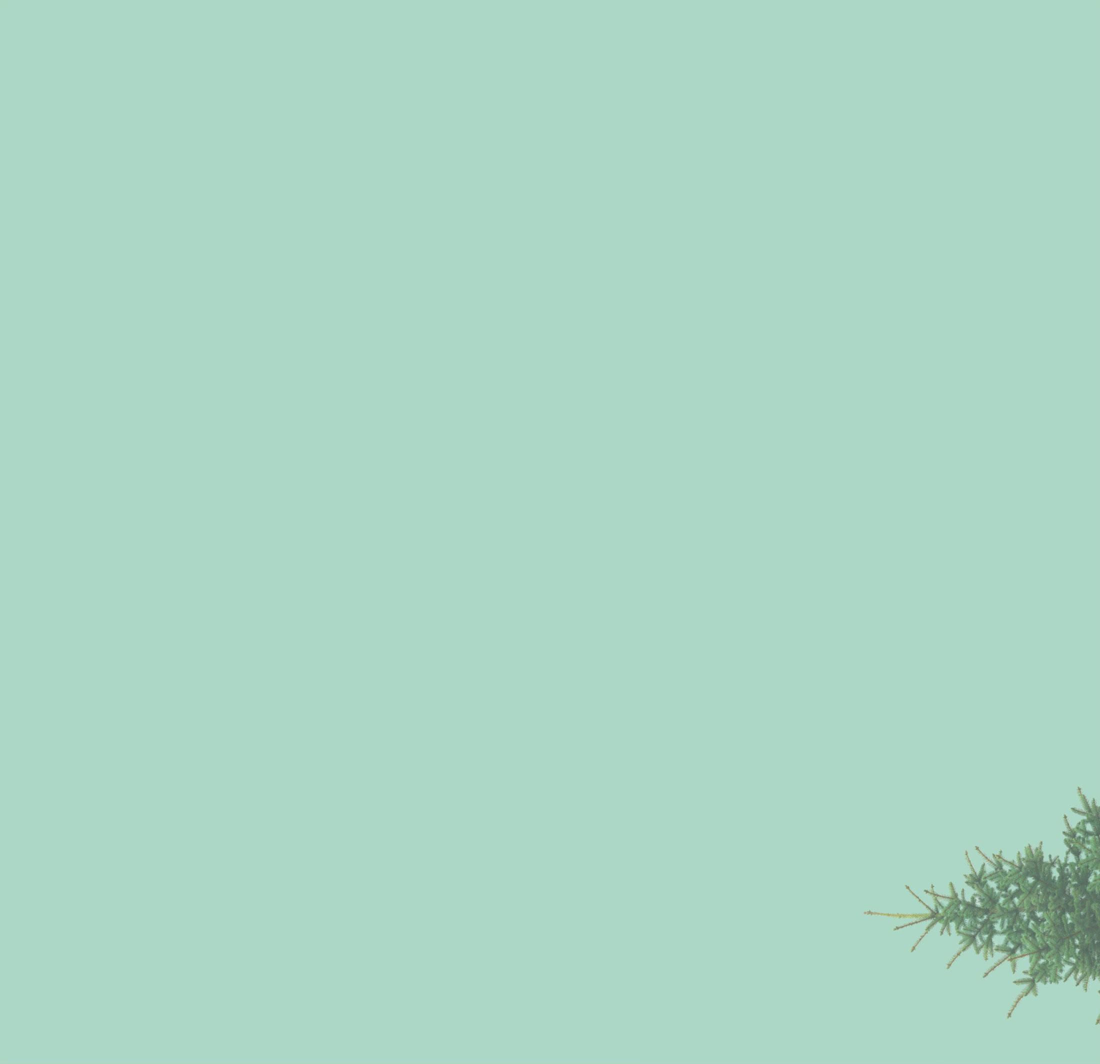 back-tree-ipad2.jpg