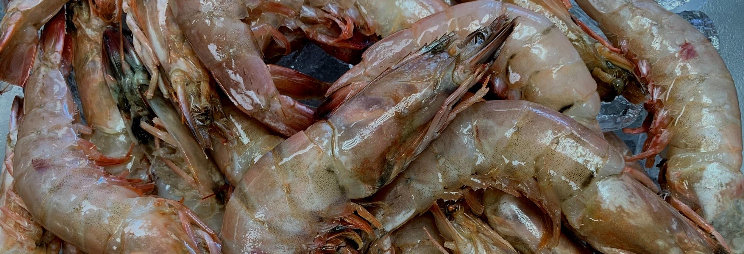 Fresh Seafood -