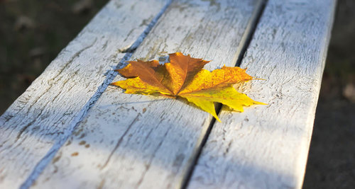 leaf+2+boost.jpg