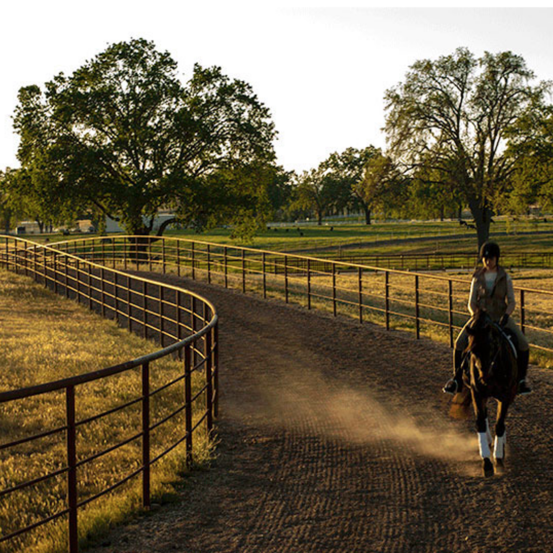 premier trail/galloping track -