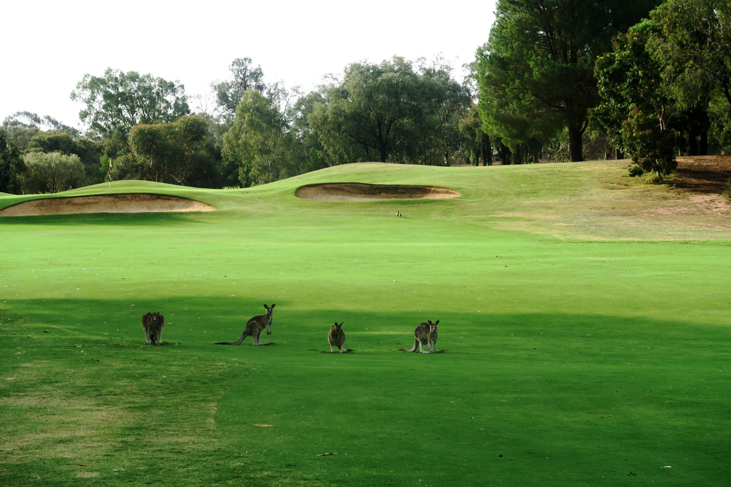 golf_mulwala_resort.jpg