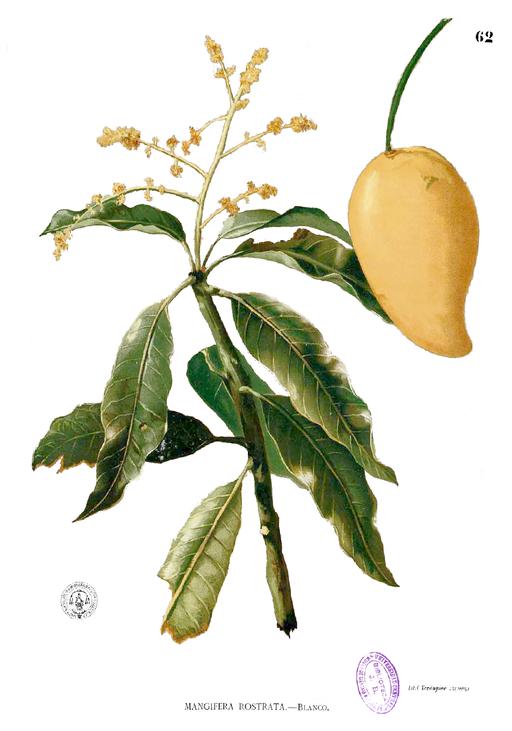 Illustration    by Francisco Manuel Blanco [Public domain], via    Wikimedia Commons   .