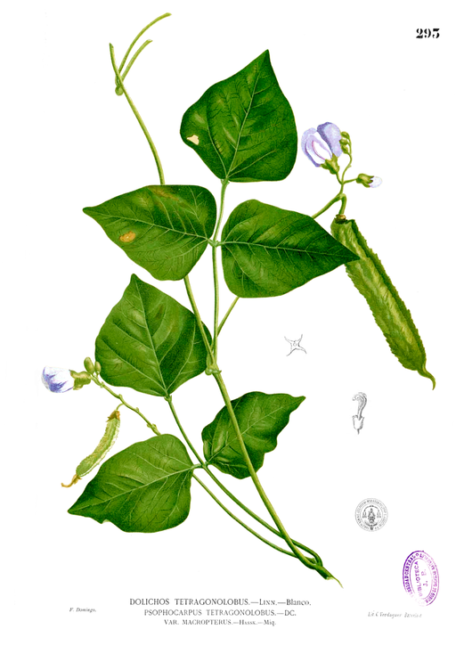 Illustration    by By Francisco Manuel Blanco /    Wikimedia Commons   .