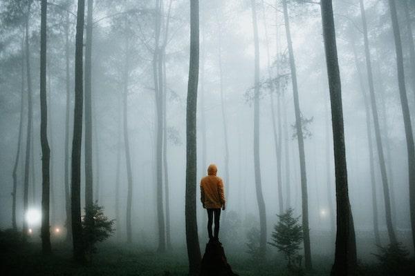 WELLIVER-yellow-raincoat-alone-woods-min.jpg