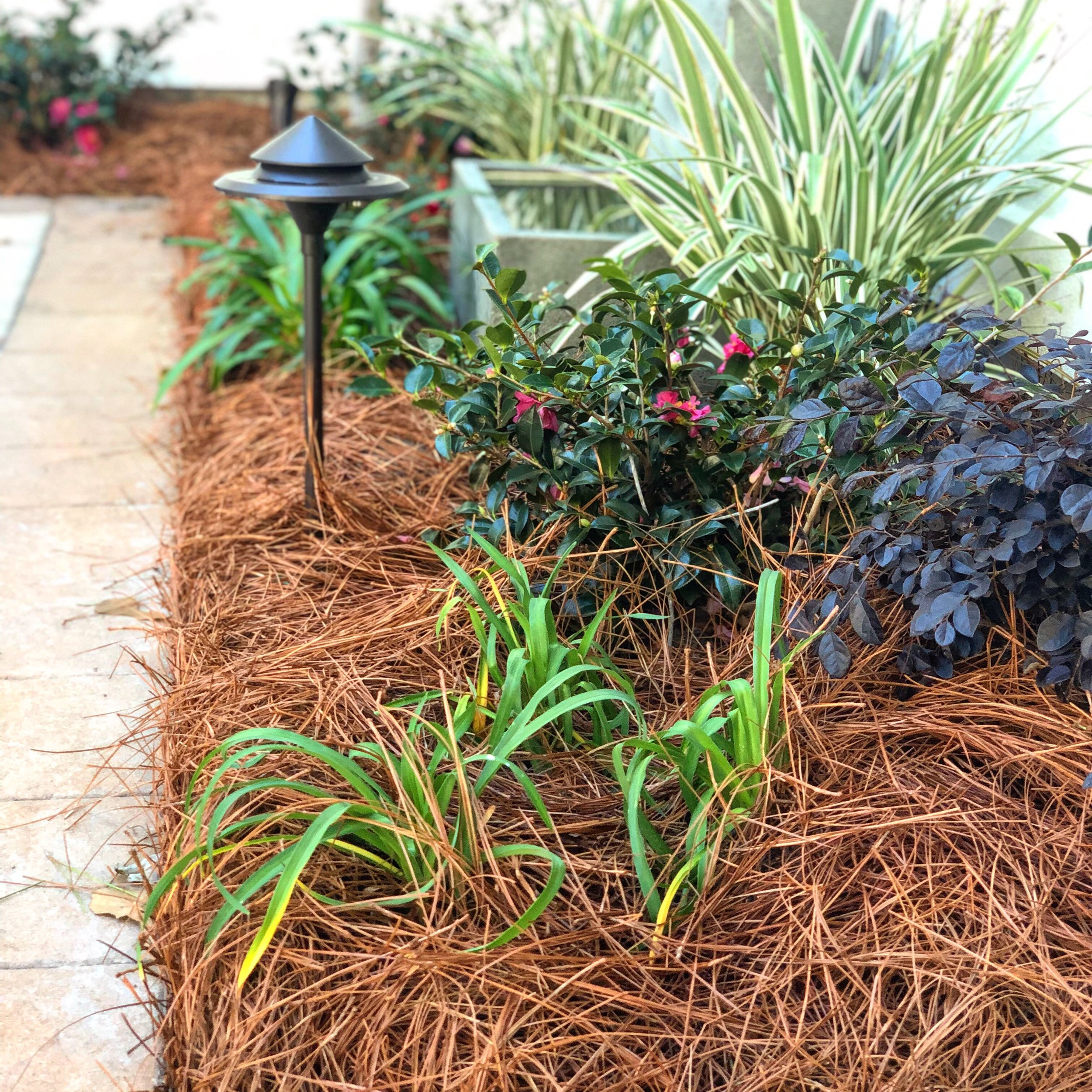Colored Pine Straw - Creates a high quality professional finish to your property!