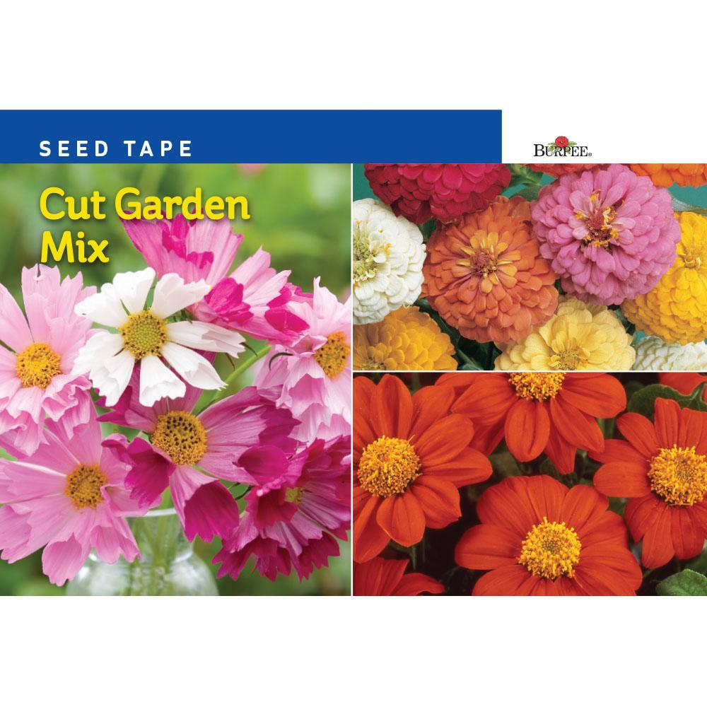 burpee-flower-seeds-49991-64_1000.jpg