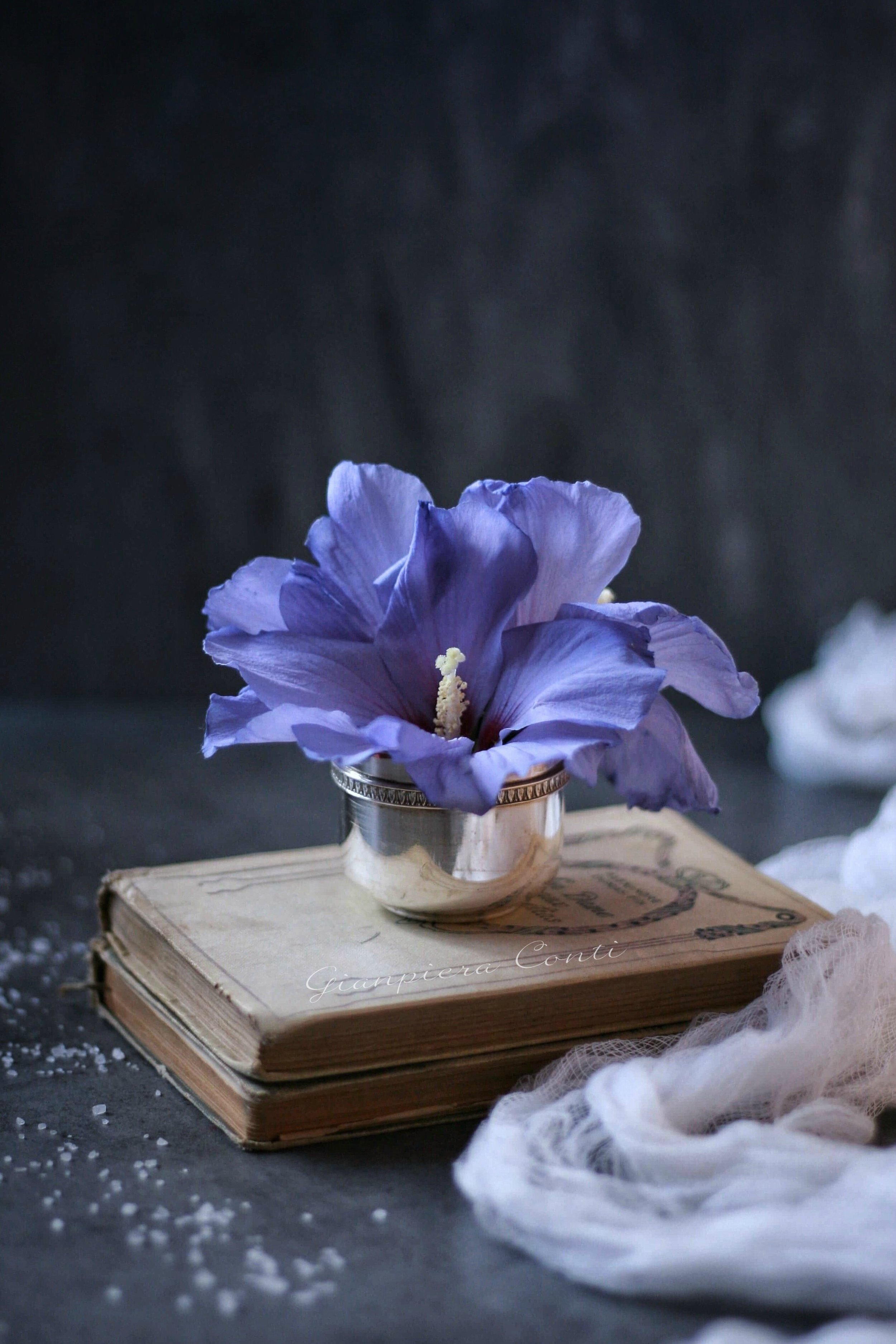 Blue Hibiscus.jpg