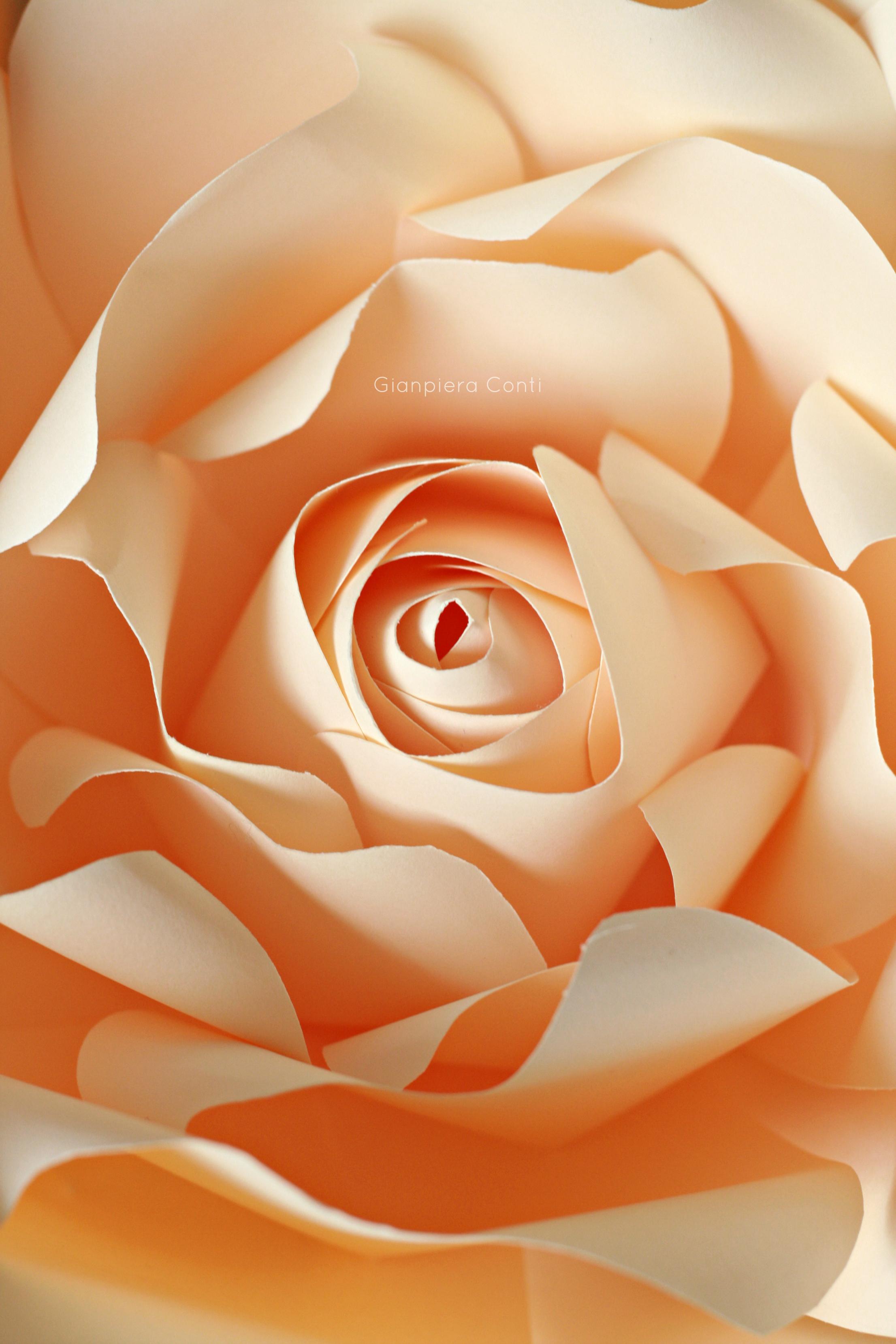 Rose GC.jpg