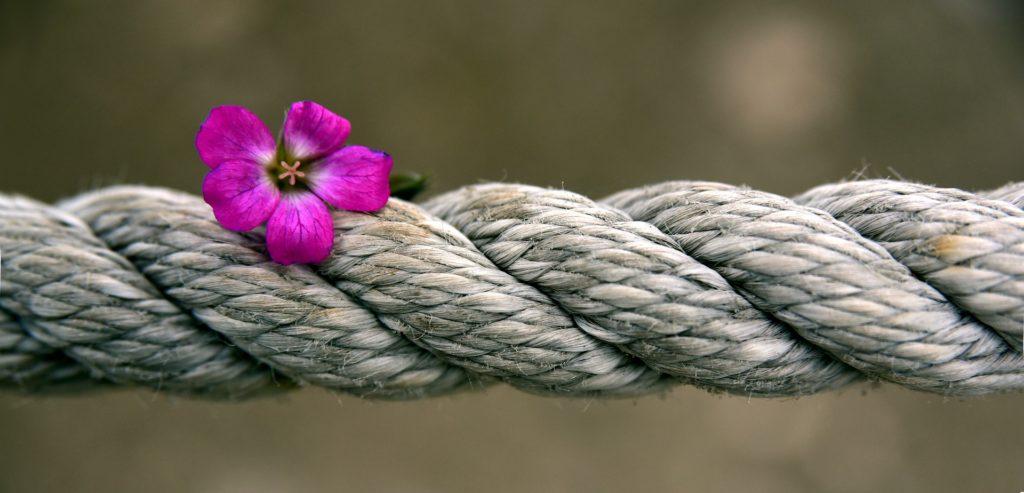 Hampfiber - Visste du at flertallet av de syntetiske fibrer vi bruker i dag er produsert av polymer-baserte, petrokjemiske materialer (med andre ord, svært giftige materialer)?