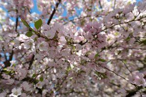 Blossom-2-300x200.jpg