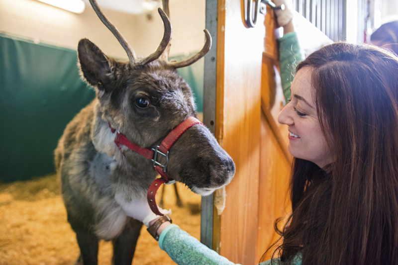 reindeer-cornell-fenn.jpg