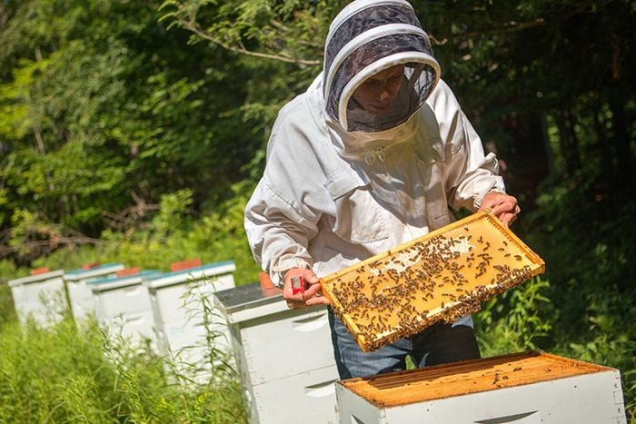 bees-fungicide-700x467-compressor.jpg