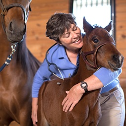 Amy Leibeck, DVM - Owner & Veterinarian, Genessee Valley Equine Clinic