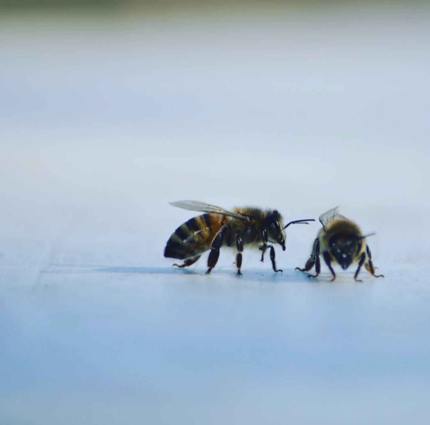 Bee_Wisdom.png