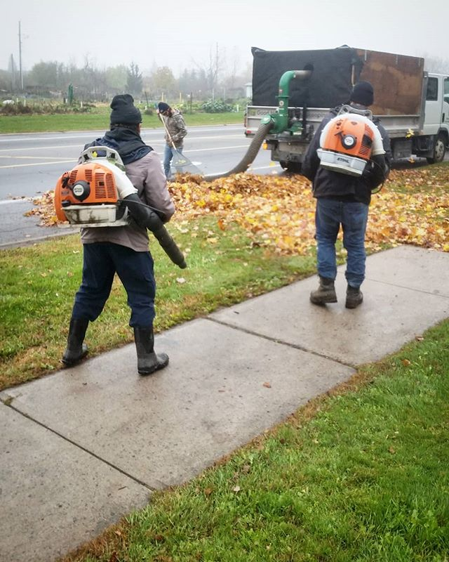 The battle rages on. 🍁 #ottawa #ottcity #hintonburg #myottawa #ottawalife #613 #yow #landscaping #lawncare #yardwork #gng #instagood #photooftheday #hardwork #dailygrind #fall #fallcolours #autumncolors #trees #autumn