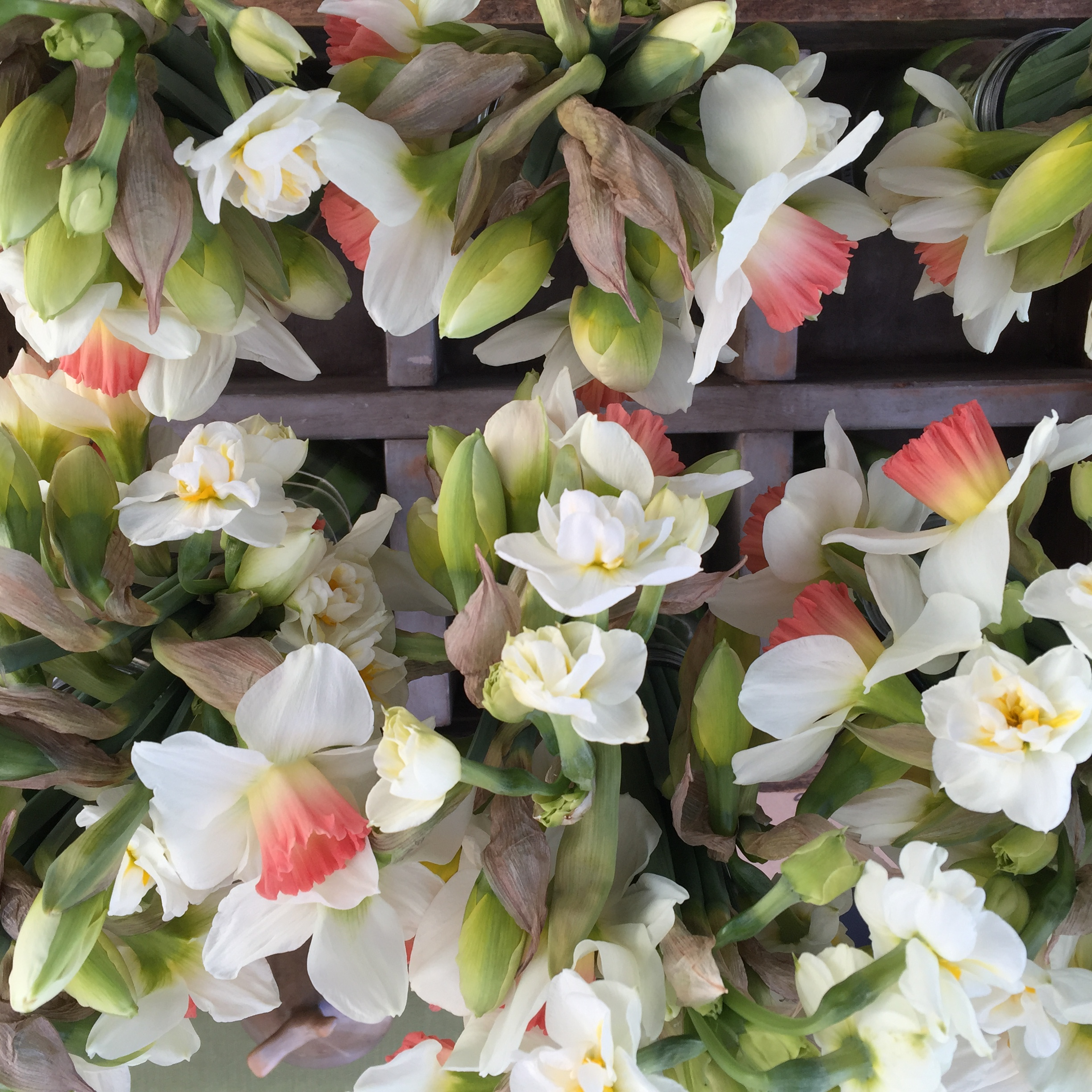 website_cutflowers_page_narcissus.jpeg
