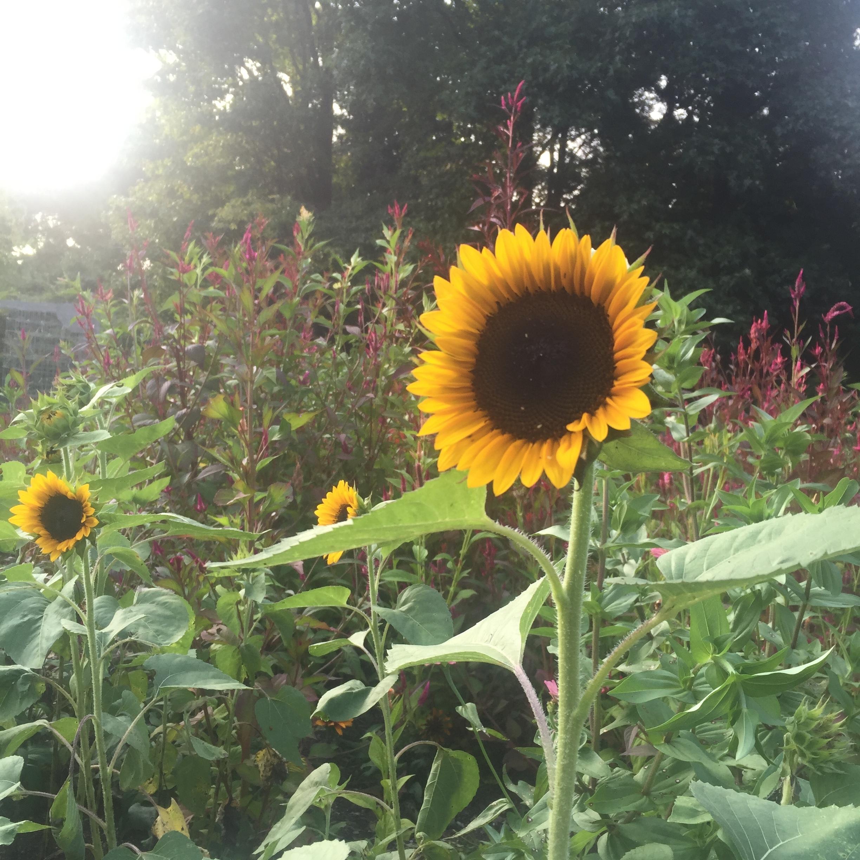 website_cutflowers_page_sunnies.jpeg