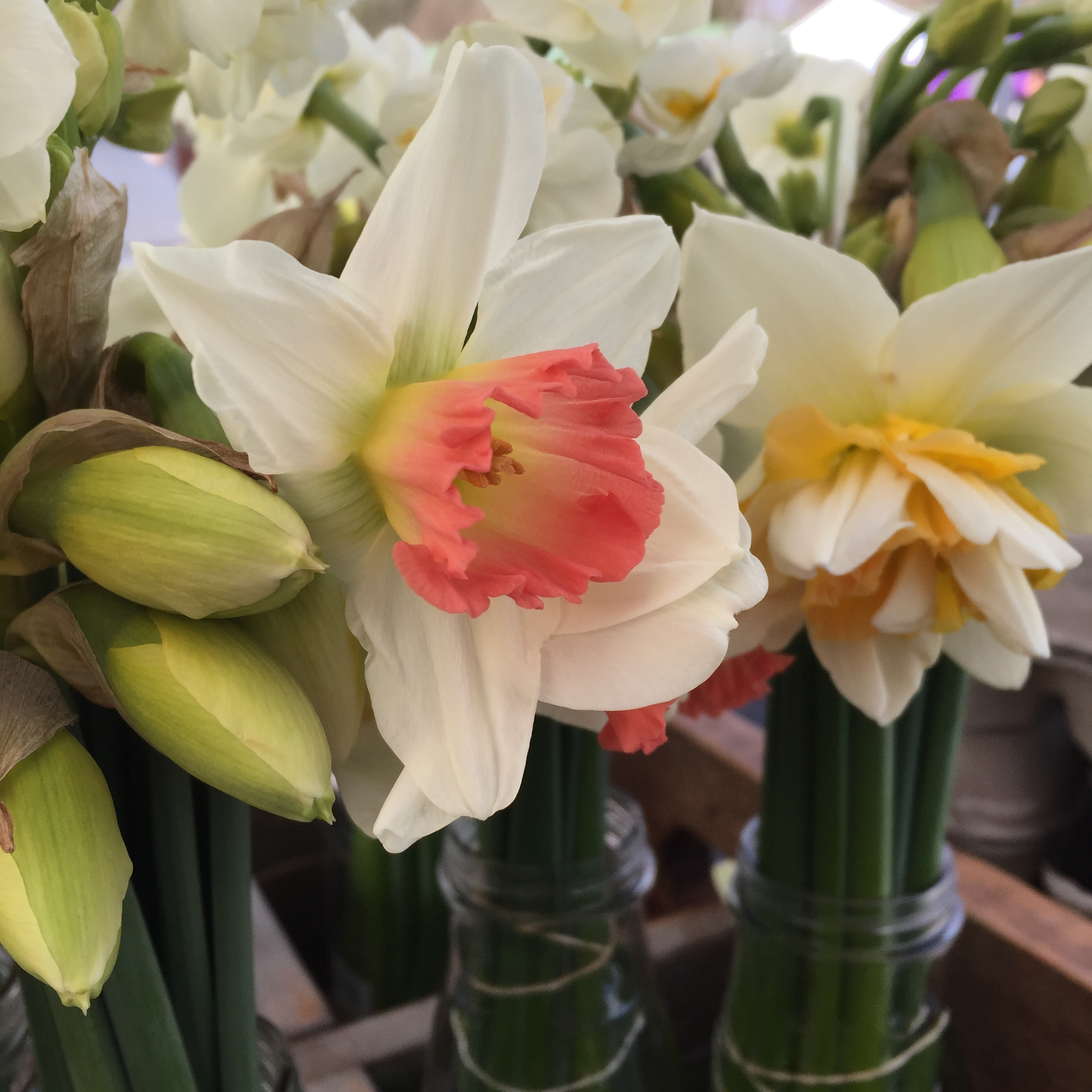 website_cutflowers_page_narcissus2.jpeg