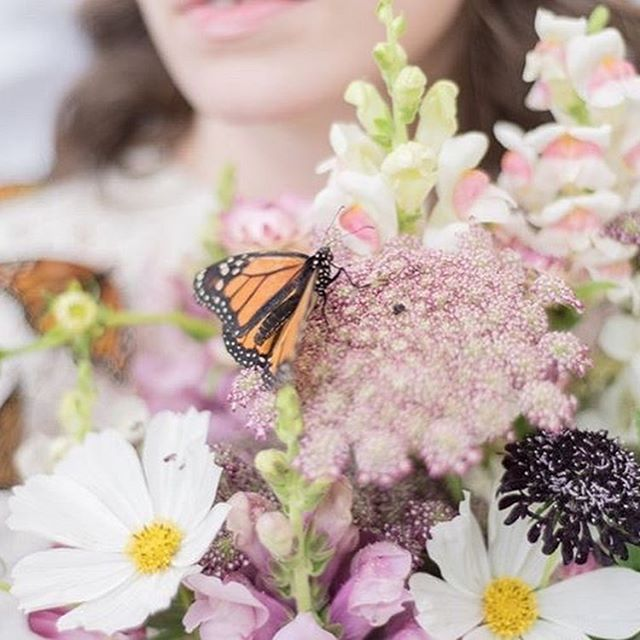 A couple of weekends ago, @morganhayleyphoto did a photo shoot with some of our butterflies, and the results are pretty magical.  Go check her page out to see more of her work.  She's talented, easy to work with, AND now a pro butterfly wrangler.  What more could you ask for?