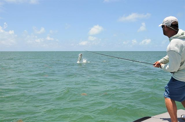 Turns out he's not too bad on the pointy end either #tarpon #flyfishing