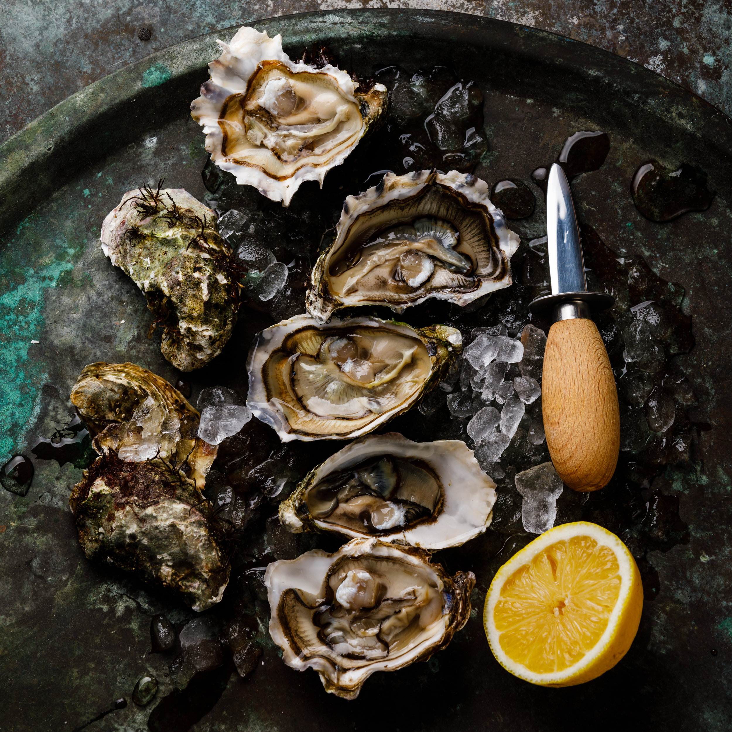 The Oyster -