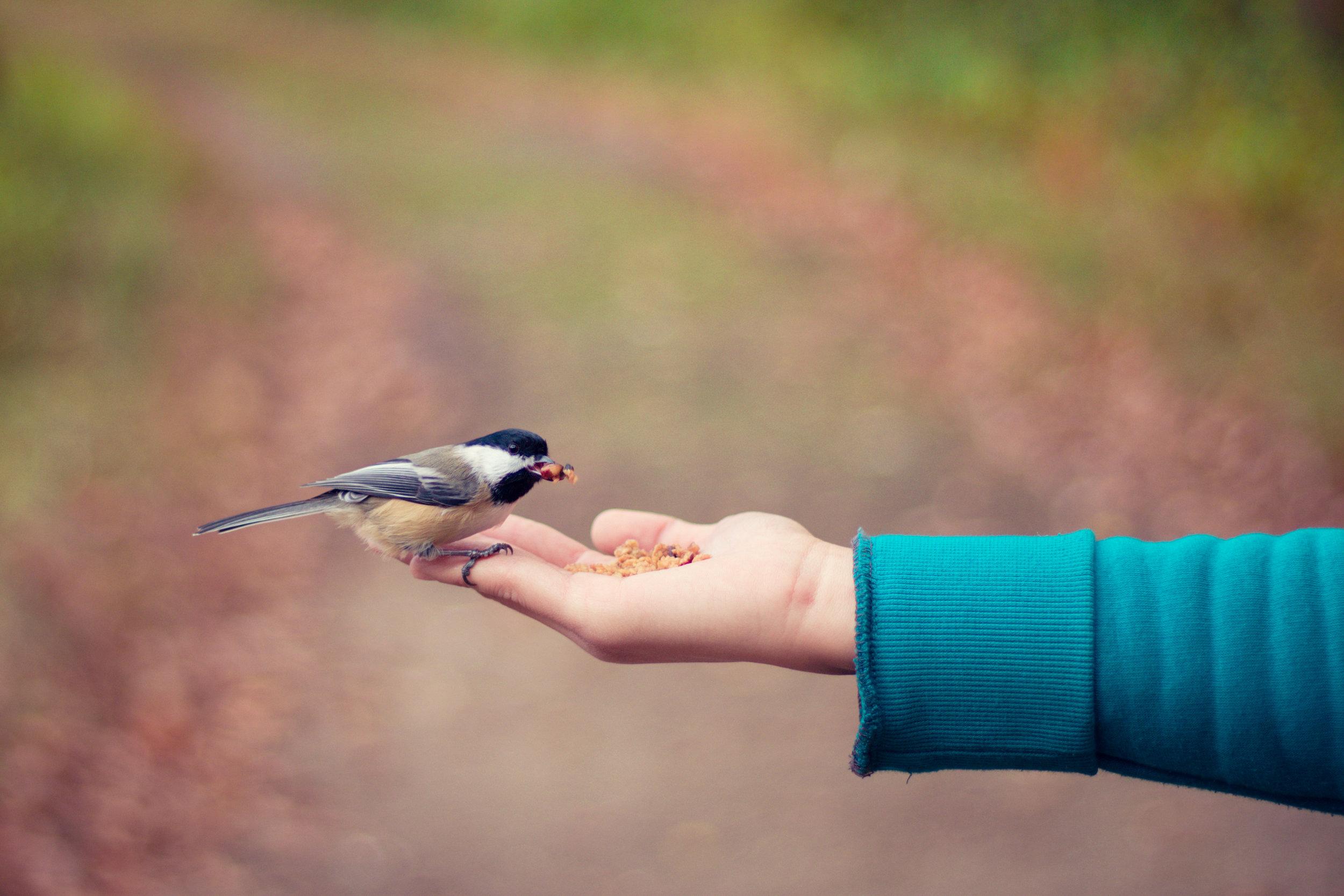 Feeding Bird Hand
