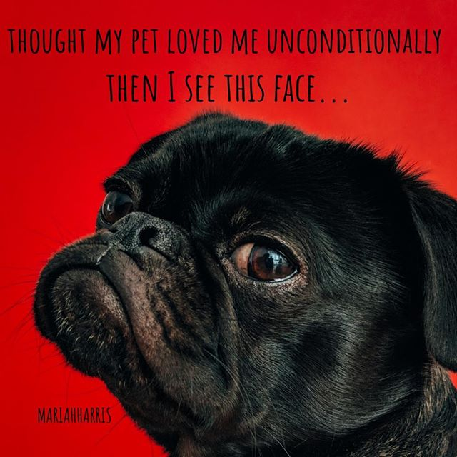 Omg I just loved this dog face. I think humor is so important in life. If we Don't laugh we Don't live.⠀ .⠀ My husband calls crows feet on the face smile or laugh lines. He is a happy person and we both laugh a lot! ⠀ .⠀ .⠀ .⠀ Don't forget I have a Facebook group that is hilarious! All things mental health but here to give you a good laugh because life is too short! ⠀ .⠀ Link in profile⠀ .⠀ .⠀ .⠀ https://www.facebook.com/groups/250706369165021/⠀ .⠀ .⠀ .⠀ #mariahharris #purveyorsoffunny #funny #humor #Facebook #facebookgroup #hilarious #life #pug #puglife #meme #memes #mustsee #love #haha #mentalhealth #mentalhealthmatters #mentalhealthawareness #recovery #recovering