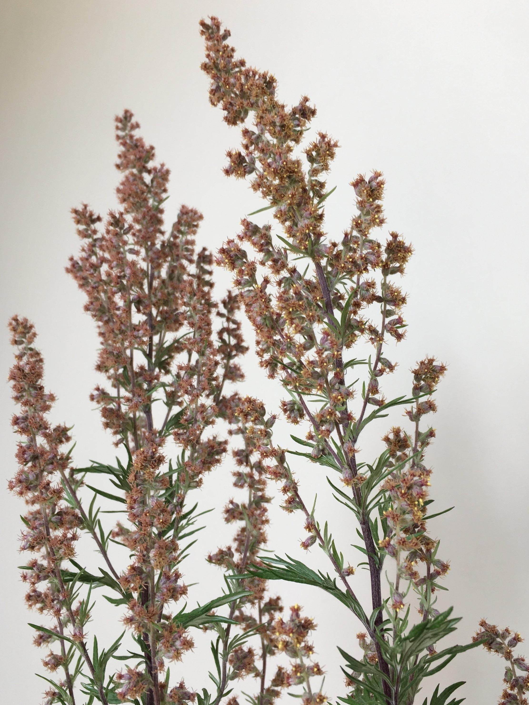 Botanical Medicine -