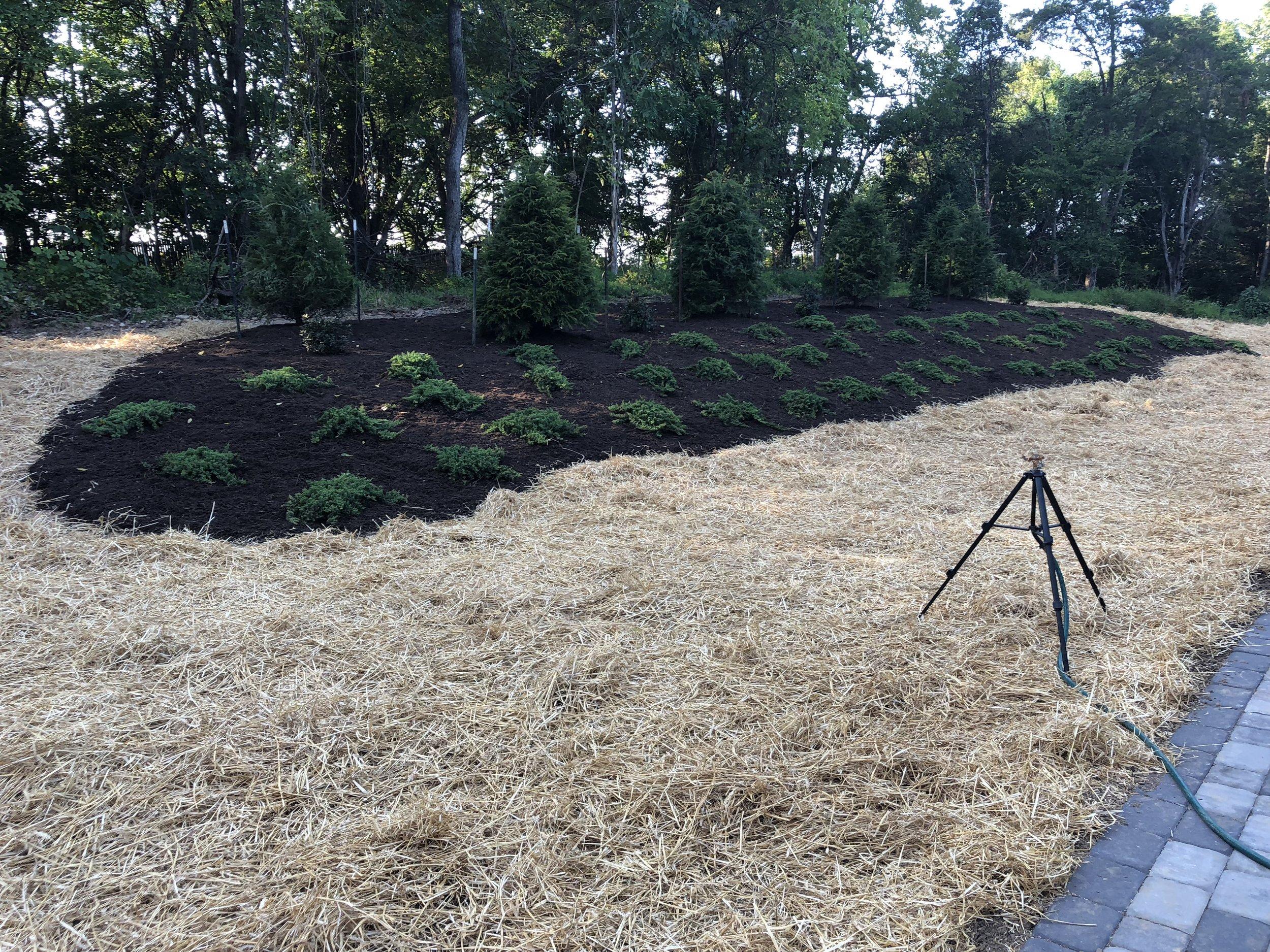 hillside complete (4).JPG